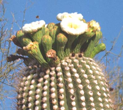 Saguaro Natural History Association