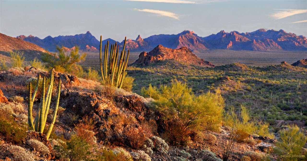 Desert landscapes shindig 2015 photo show for Desert landscape